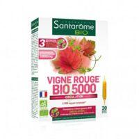 Santarome Bio Vigne rouge Solution buvable 20 Ampoules/10ml à ANDERNOS-LES-BAINS