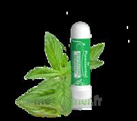 PURESSENTIEL RESPIRATOIRE Inhalation nasal 19 huiles essentielles à ANDERNOS-LES-BAINS