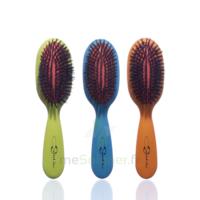 Cartel Brosse Cheveux Pneumatique Sanglier /1 à ANDERNOS-LES-BAINS